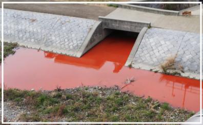 京都市南区の鴨川が赤色に変色した原因は工場排水?!プランクトンの可能性も調査!