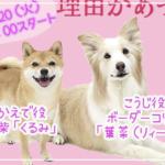 【着飾る恋には理由があって】犬の名前や犬種はボーダーコリーと豆柴で可愛い!こうじくんがアイコンの理由が気になる!
