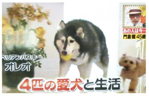 門倉健の嫁や息子・娘の顔写真は?保護犬活動をする愛犬家だった!
